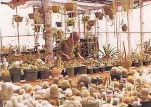 That's a lot of cactus