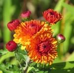 11 - 2 - 2014  C flower